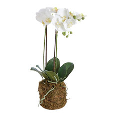 Artificial Phalaenopsis Drop-In Plant, 23""