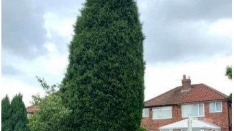 Tree Removal Wythenshawe