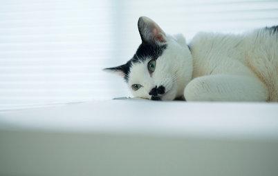 猫と人の幸せな暮らし:アートディレクター菅村将哉さんと夏目ちゃんが暮らす白い部屋