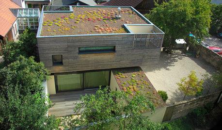 10 idées reçues sur les toitures végétalisées