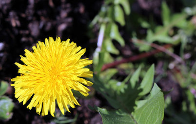 Why Your Garden Might Be Full of Weeds