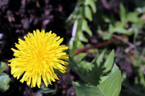 Natural Ways To Get Rid Of Perennials 64