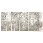 """James Bourret - White on White, on White Triptych Print, Set of 3, 40"""" X 90"""" - Hi resolution Photographic triptych print on canvas by acclaimed photographer/artist James Bourret. This highly detailed photograph was made using a large format view camera and is full of depth and three-dimensionality. The prints are mounted (stretched) on 3 separate frames. Ready to hang. While no artwork should be hung in direct sunlight, the prints are very lightfast and durable."""