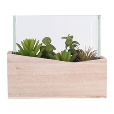 """7Lx3.5Wx6H"""" Assorted Succulents in Glass"""