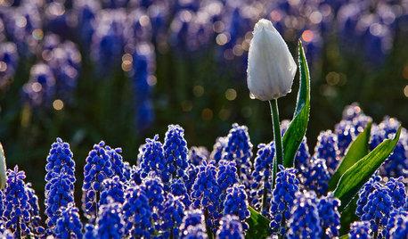Blomstrende inspiration – mens vi venter på foråret...