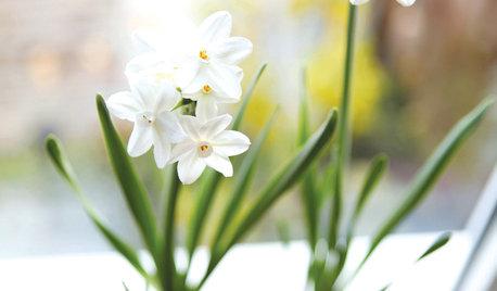Holiday DIY: Mason Jar Forced Bulbs and Evergreen Gift Tags