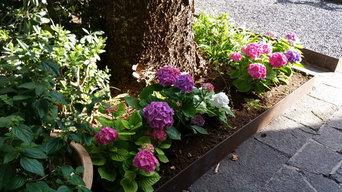 Hortensias y rosales