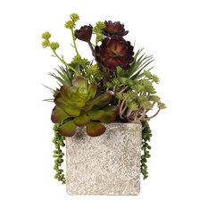 Succulent, Hen and Chicks Coastal Cottage Arrangement in Stone Pot
