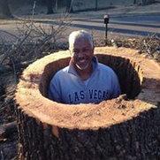 Photo de Sterling tree service