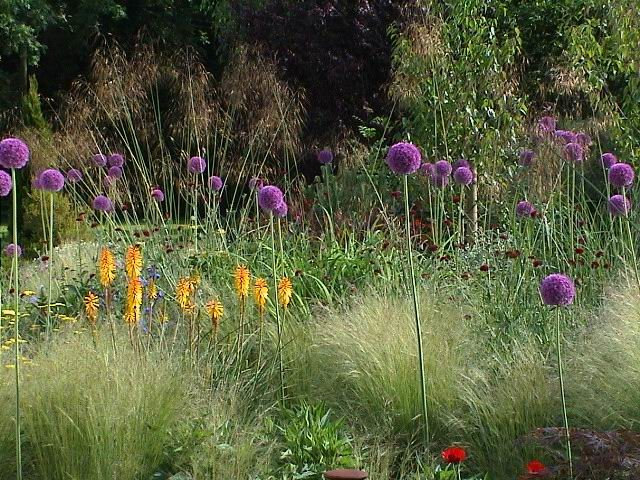 Bring the Beauty of the Prairie to Your Garden