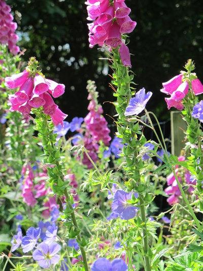 Traditional  by Fenton Roberts Garden Design