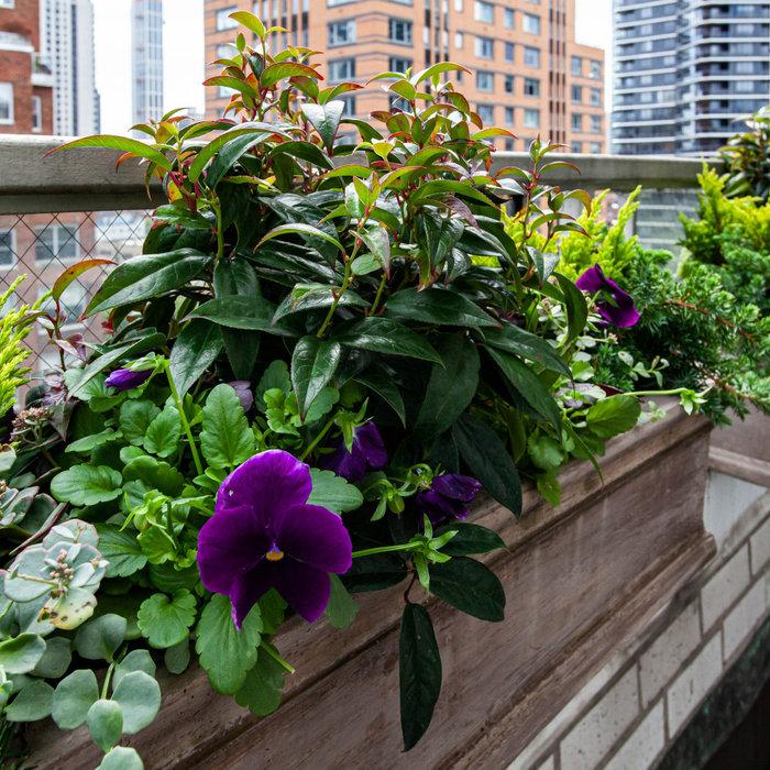 Seasonal Terrace Planting