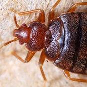 Pestend Pest Control Melbourne's photo
