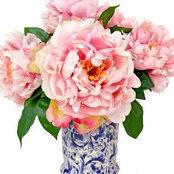 pink_peony's photo