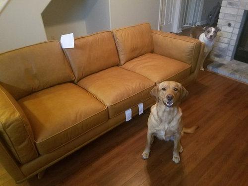 Article Leather Sofa Timber Charme Tan