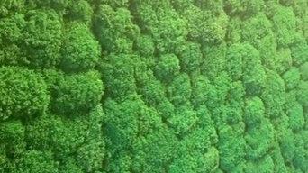 Озеленение - королевский мох