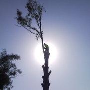 Go Tree Quotes's photo