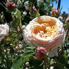 Jardín de la semana: Belleza sostenible bajo grandes árboles