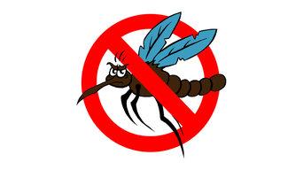 Mosquito Movers