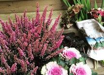 Vad ingår i ditt arvode i garden staging?