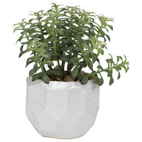 Tree Succulents, Gloss White Ceramic Bowl