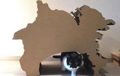 猫と人の幸せな暮らし:「福を招く猫」千葉ちゃんと〈猫と建築社〉の日常