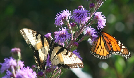 What Monarch Butterflies Taught Me About Garden Design