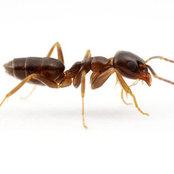 Pest Control Melbourne's photo
