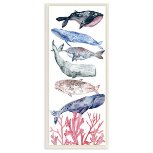 Whale Species Framed Print By Rachel Byler Beach Style Prints And Posters By Marmont Hill