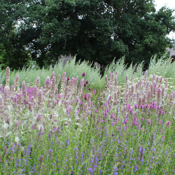 Stonehouse Meadow - Summer