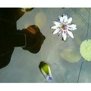 Foto de Natural Flooring