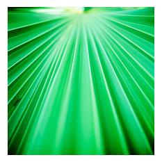 Fine Art Photograph, Palm Frond III, Fine Art Paper Giclee