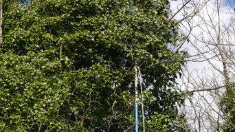 Tree Surgery Project London