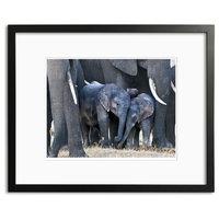 In the Play Pen, Botswana, by Robert Ross, 16x20 Framed Print