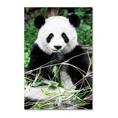 "Philippe Hugonnard 'Giant Panda' Canvas Art, 24""x16"""