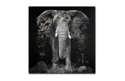'The Disappearance of the Elephant' Canvas Art by Erik Brede