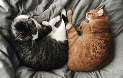 快適な場所は猫が知っている。猫のお昼寝スポット40選