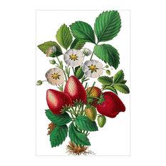 """Strawberries"" Botanical Print, 39x59 cm"
