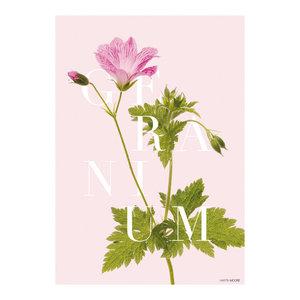 """""""Geranium"""" Paper Print, A3"""