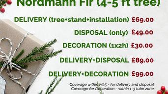 Nordmann Fir (4-5 ft Christmas Tree)