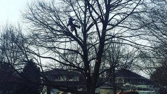 Linden Tree Trimming