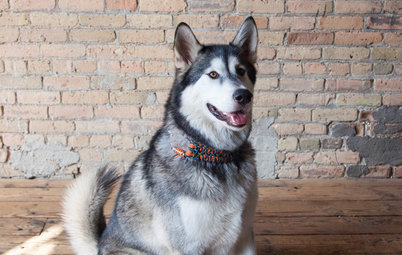 Pet of the Week: Rocky Sticks His Paw Into the Tile Business
