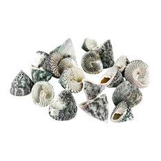 "Natural Beach Seashells Appox. 8oz Per Bag, Trochus Stellatus 0.8""-1.25"""