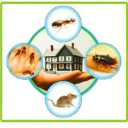Commercial Pest Control Geelong's photo