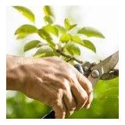Online Pest Control's photo