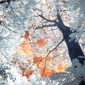 """Trees III"" Landscape Photography Wall Art by P.T. Ruk, 36""x24"""