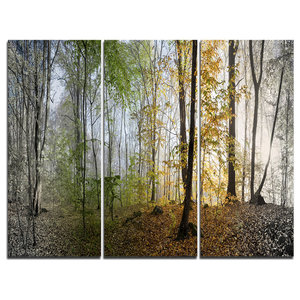 """""""Morning Forest Panoramic View"""" Photo Canvas Print, 3 Panels, 36""""x28"""""""