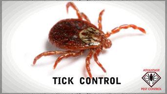 Tick Spraying