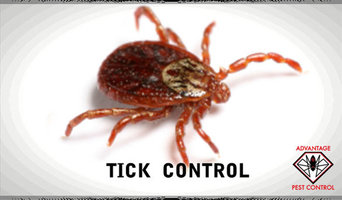 Tick Spraying