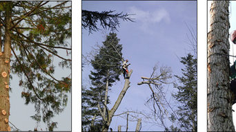 Puget Sound Tree Care
